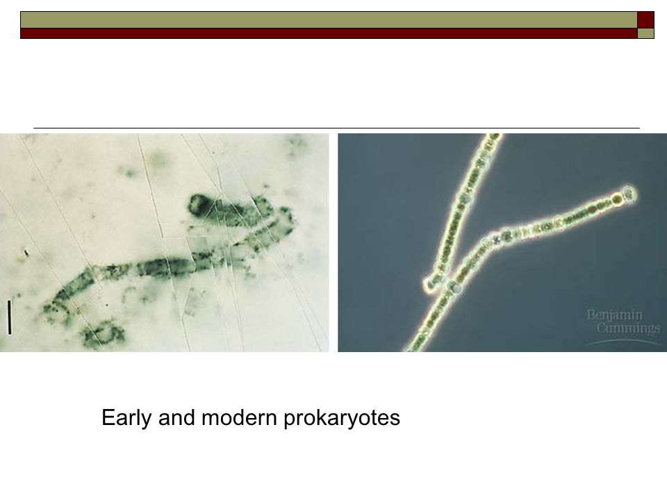  Laboratory experiments have demonstrated that RNA sequences can evolve in abiotic conditions.