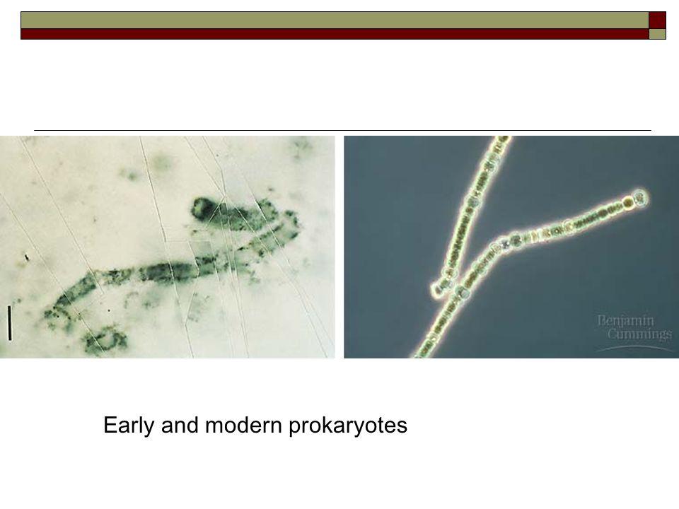 Asal Usul Eukariota  A.Invaginasi plasma membran  B.