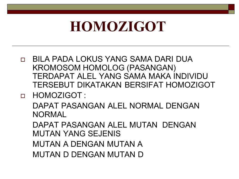 HOMOZIGOT  BILA PADA LOKUS YANG SAMA DARI DUA KROMOSOM HOMOLOG (PASANGAN) TERDAPAT ALEL YANG SAMA MAKA INDIVIDU TERSEBUT DIKATAKAN BERSIFAT HOMOZIGOT