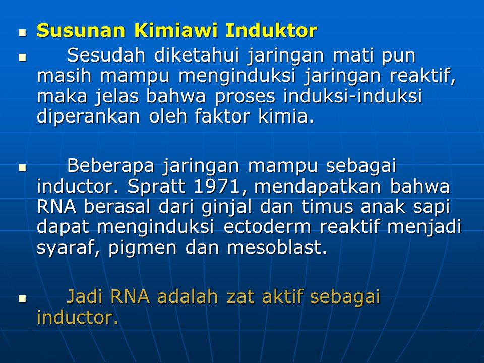 Susunan Kimiawi Induktor Susunan Kimiawi Induktor Sesudah diketahui jaringan mati pun masih mampu menginduksi jaringan reaktif, maka jelas bahwa prose