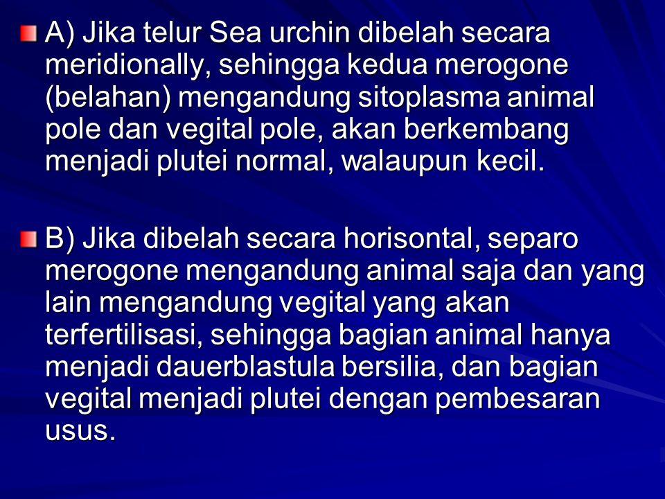 A) Jika telur Sea urchin dibelah secara meridionally, sehingga kedua merogone (belahan) mengandung sitoplasma animal pole dan vegital pole, akan berke