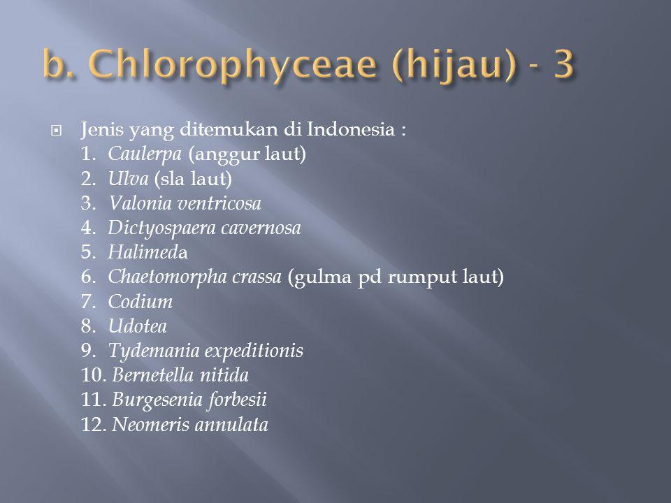  Jenis yang ditemukan di Indonesia : 1. Caulerpa (anggur laut) 2. Ulva (sla laut) 3. Valonia ventricosa 4. Dictyospaera cavernosa 5. Halimed a 6. Cha