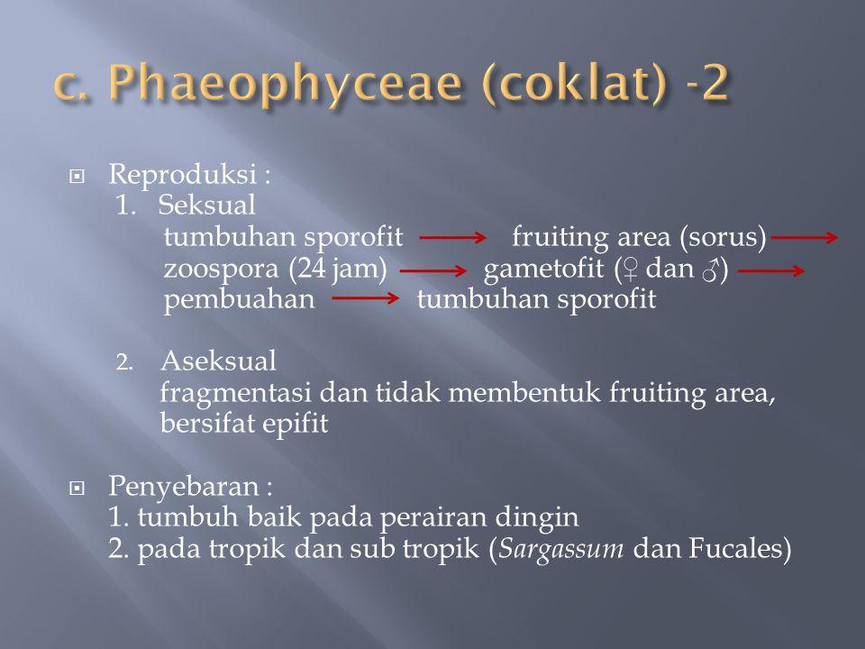  Reproduksi : 1. Seksual tumbuhan sporofit fruiting area (sorus) zoospora (24 jam) gametofit (♀ dan ♂) pembuahan tumbuhan sporofit 2. Aseksual fragme
