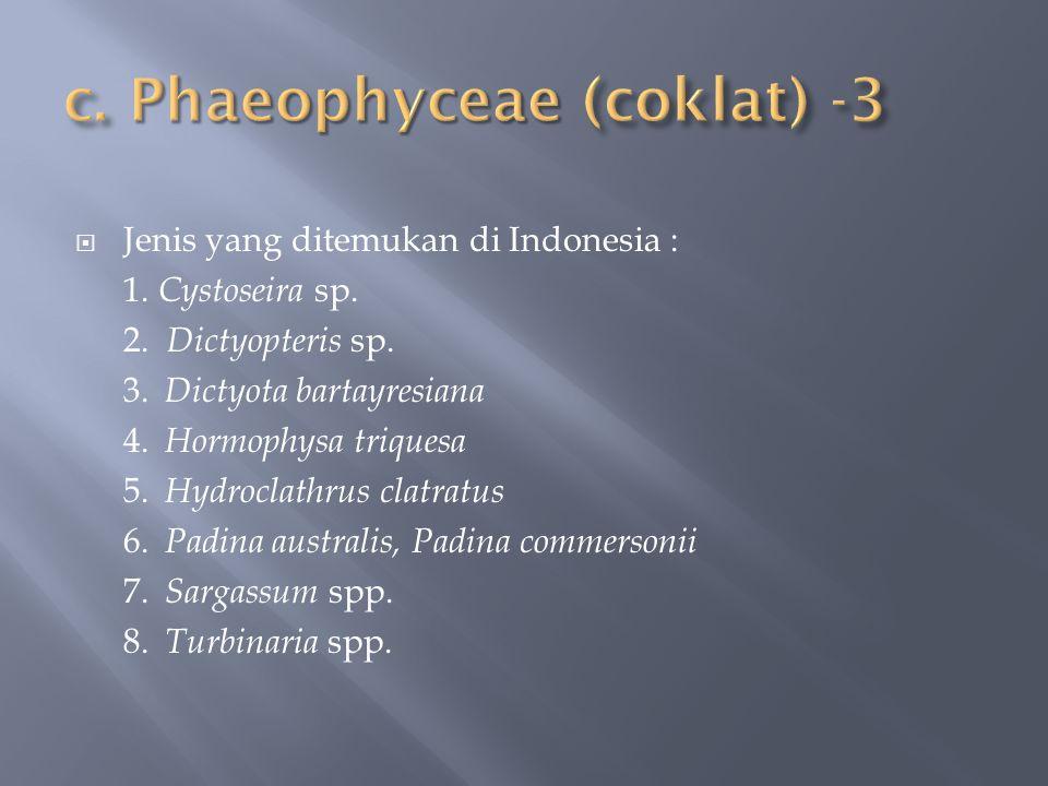  Jenis yang ditemukan di Indonesia : 1. Cystoseira sp. 2. Dictyopteris sp. 3. Dictyota bartayresiana 4. Hormophysa triquesa 5. Hydroclathrus clatratu