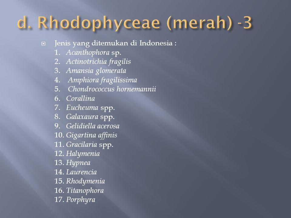  Jenis yang ditemukan di Indonesia : 1. Acanthophora sp. 2. Actinotrichia fragilis 3. Amansia glomerata 4. Amphiora fragilissima 5. Chondrococcus hor