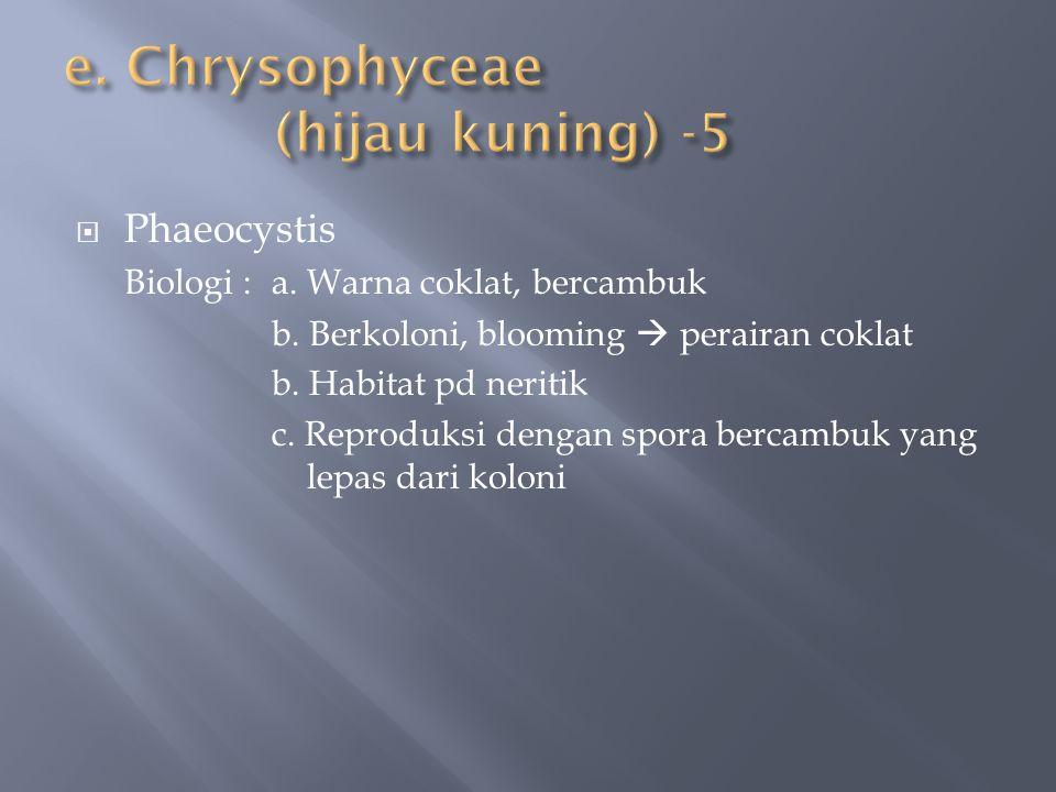  Phaeocystis Biologi : a. Warna coklat, bercambuk b. Berkoloni, blooming  perairan coklat b. Habitat pd neritik c. Reproduksi dengan spora bercambuk