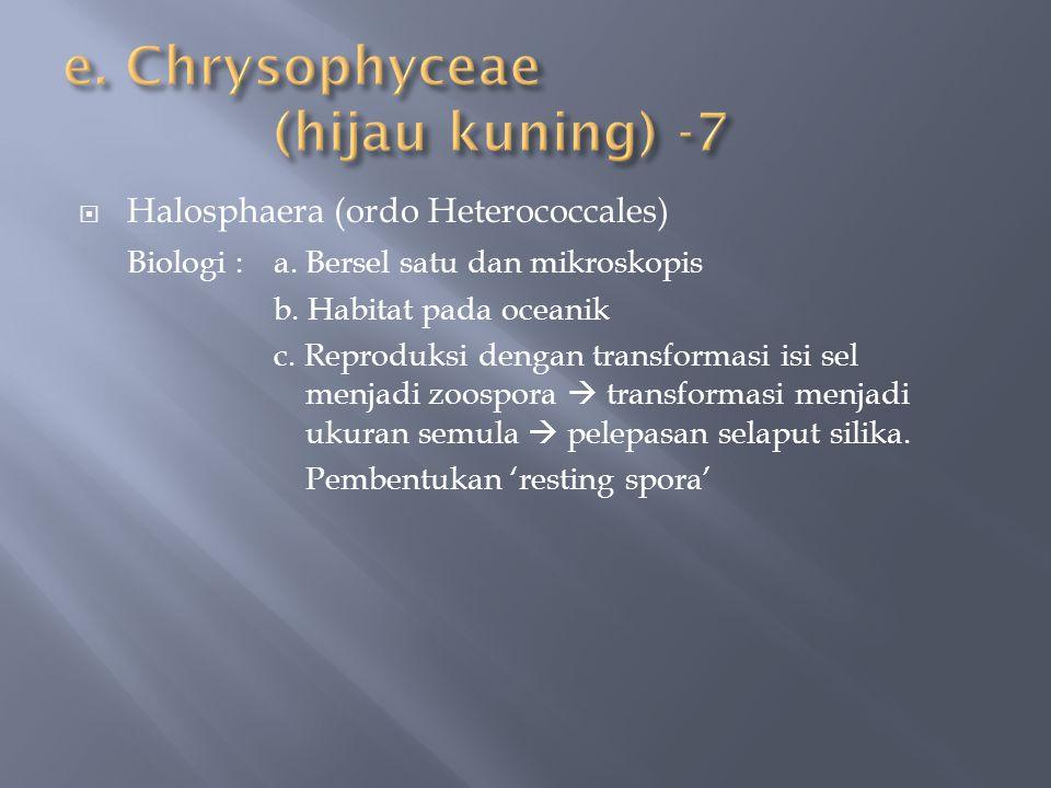  Halosphaera (ordo Heterococcales) Biologi :a. Bersel satu dan mikroskopis b. Habitat pada oceanik c. Reproduksi dengan transformasi isi sel menjadi