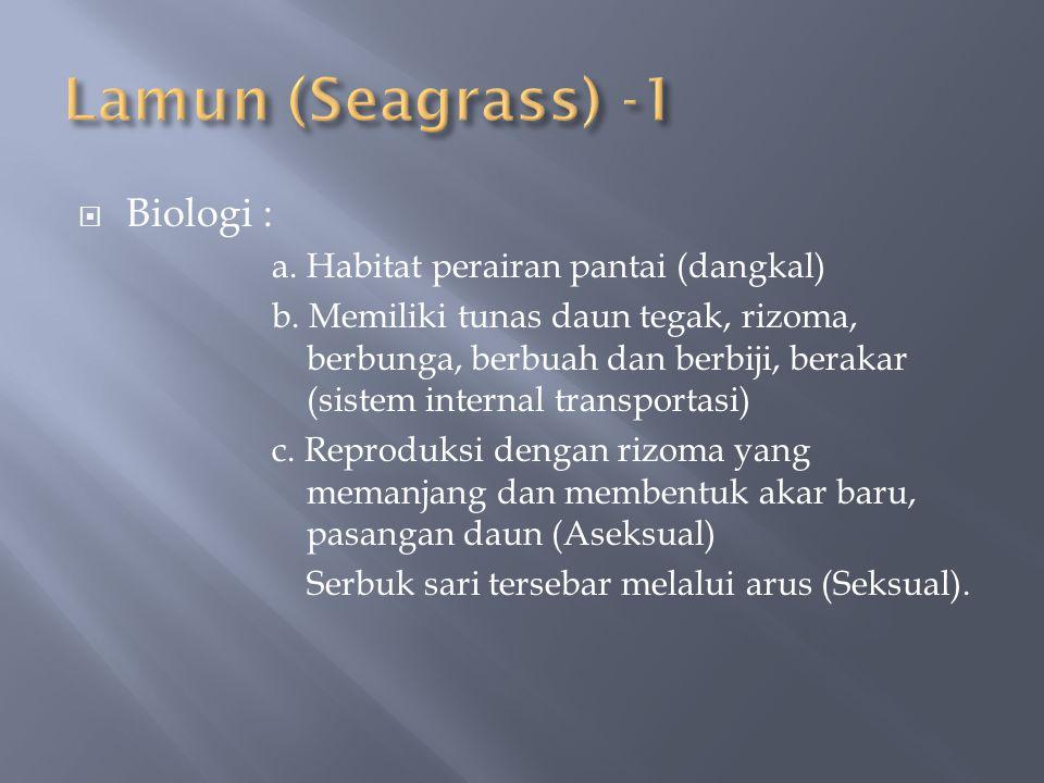  Biologi : a. Habitat perairan pantai (dangkal) b. Memiliki tunas daun tegak, rizoma, berbunga, berbuah dan berbiji, berakar (sistem internal transpo