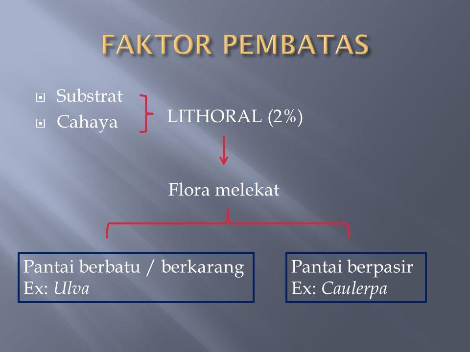  Substrat  Cahaya LITHORAL (2%) Flora melekat Pantai berbatu / berkarang Ex: Ulva Pantai berpasir Ex: Caulerpa