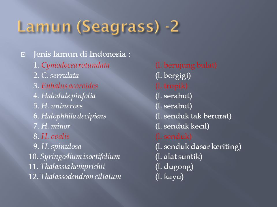  Jenis lamun di Indonesia : 1. Cymodocea rotundata (l. berujung bulat) 2. C. serrulata (l. bergigi) 3. Enhalus acoroides (l. tropik) 4. Halodule pinf
