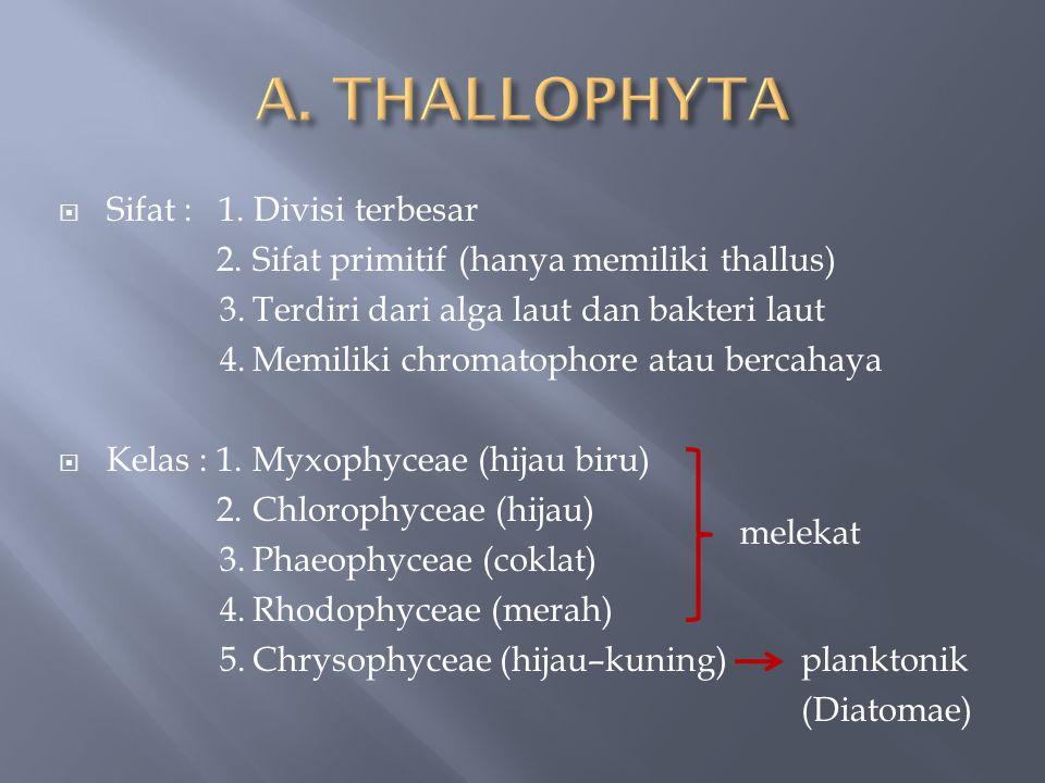  Sifat : 1. Divisi terbesar 2.Sifat primitif (hanya memiliki thallus) 3.Terdiri dari alga laut dan bakteri laut 4.Memiliki chromatophore atau bercaha