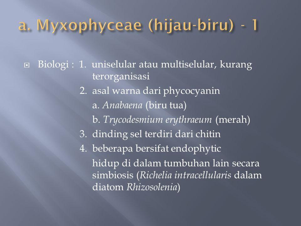  Biologi : 1. uniselular atau multiselular, kurang terorganisasi 2. asal warna dari phycocyanin a. Anabaena (biru tua) b. Trycodesmium erythraeum (me
