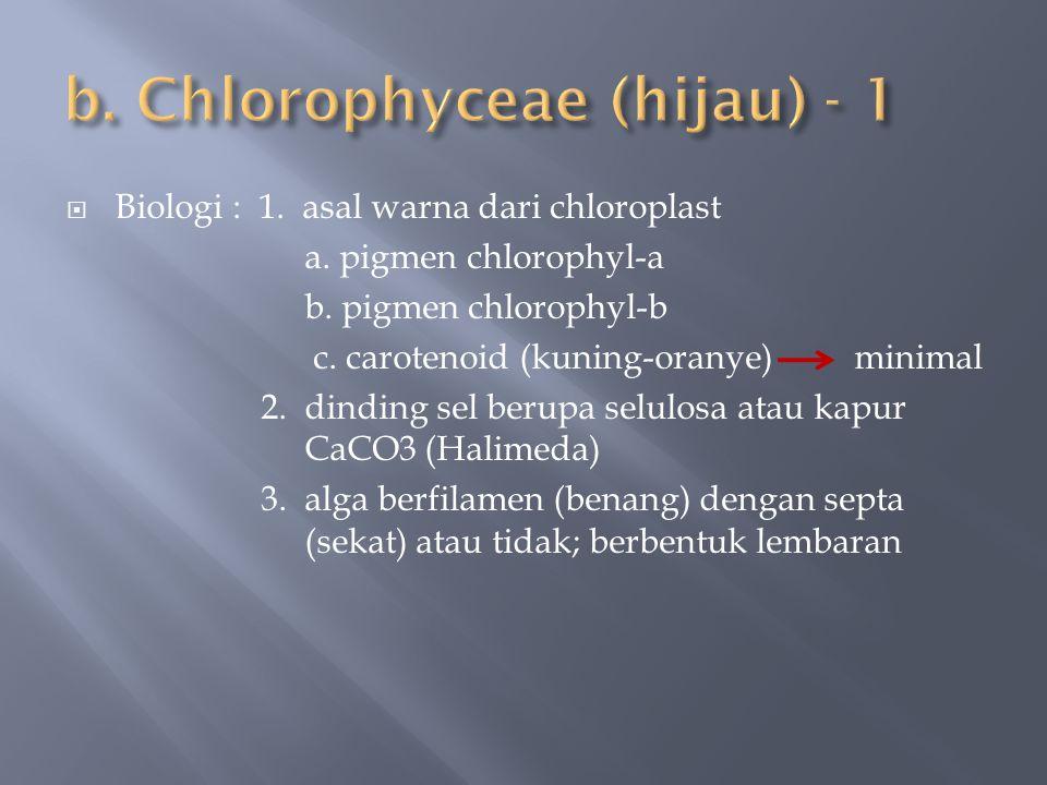  Biologi : 1. asal warna dari chloroplast a. pigmen chlorophyl-a b. pigmen chlorophyl-b c. carotenoid (kuning-oranye) minimal 2. dinding sel berupa s