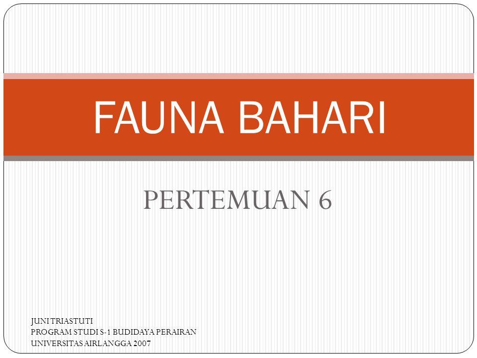 PERTEMUAN 6 FAUNA BAHARI JUNI TRIASTUTI PROGRAM STUDI S-1 BUDIDAYA PERAIRAN UNIVERSITAS AIRLANGGA 2007