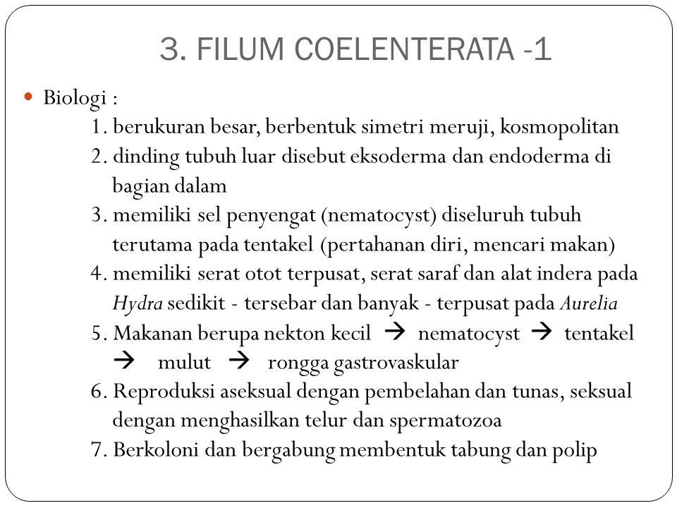 3. FILUM COELENTERATA -1 Biologi : 1. berukuran besar, berbentuk simetri meruji, kosmopolitan 2. dinding tubuh luar disebut eksoderma dan endoderma di