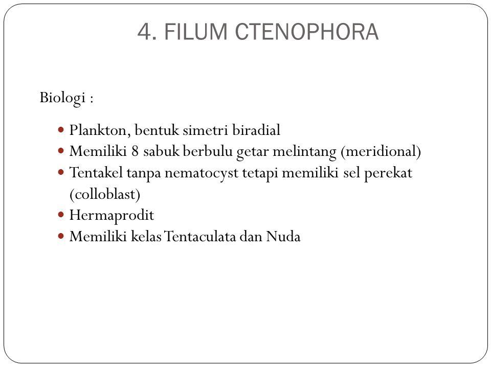 4. FILUM CTENOPHORA Biologi : Plankton, bentuk simetri biradial Memiliki 8 sabuk berbulu getar melintang (meridional) Tentakel tanpa nematocyst tetapi