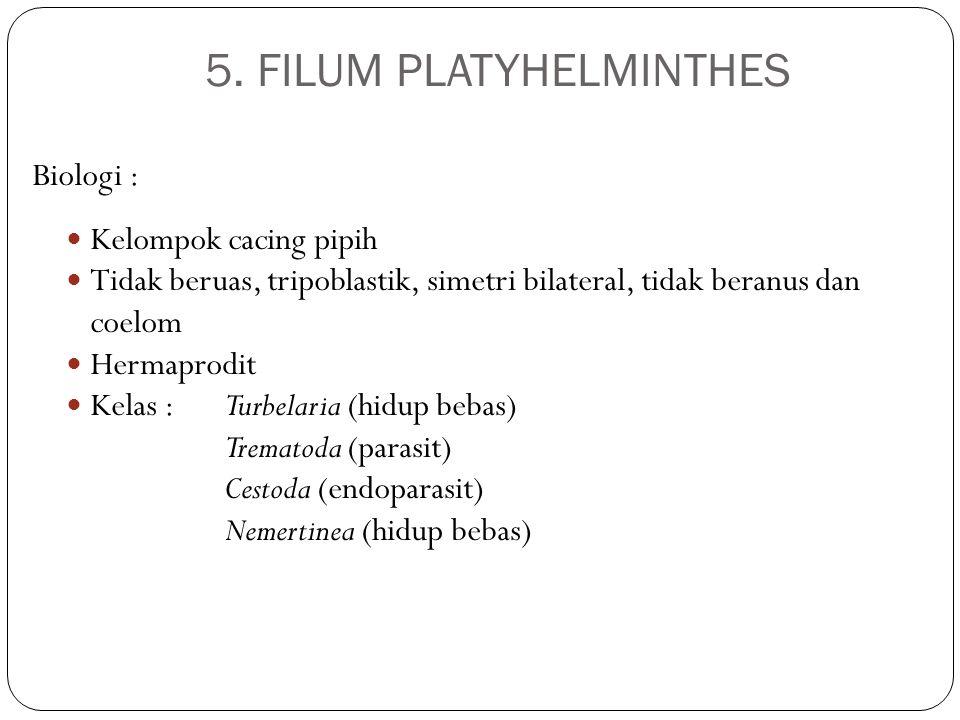 5. FILUM PLATYHELMINTHES Biologi : Kelompok cacing pipih Tidak beruas, tripoblastik, simetri bilateral, tidak beranus dan coelom Hermaprodit Kelas :Tu