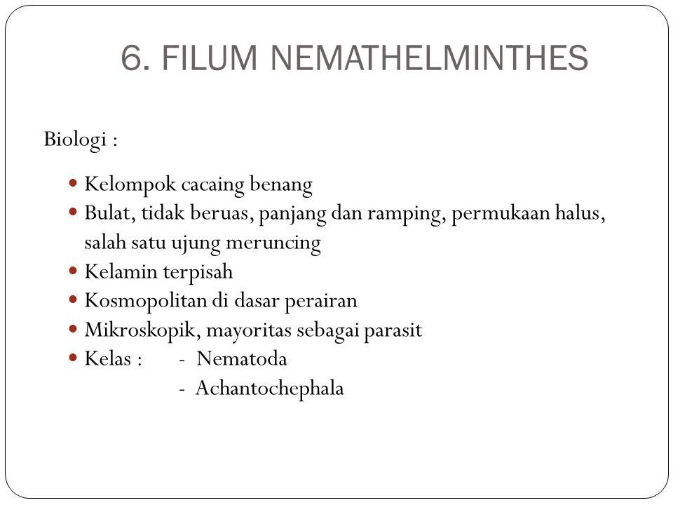 6. FILUM NEMATHELMINTHES Biologi : Kelompok cacaing benang Bulat, tidak beruas, panjang dan ramping, permukaan halus, salah satu ujung meruncing Kelam
