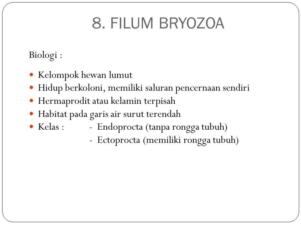 8. FILUM BRYOZOA Biologi : Kelompok hewan lumut Hidup berkoloni, memiliki saluran pencernaan sendiri Hermaprodit atau kelamin terpisah Habitat pada ga