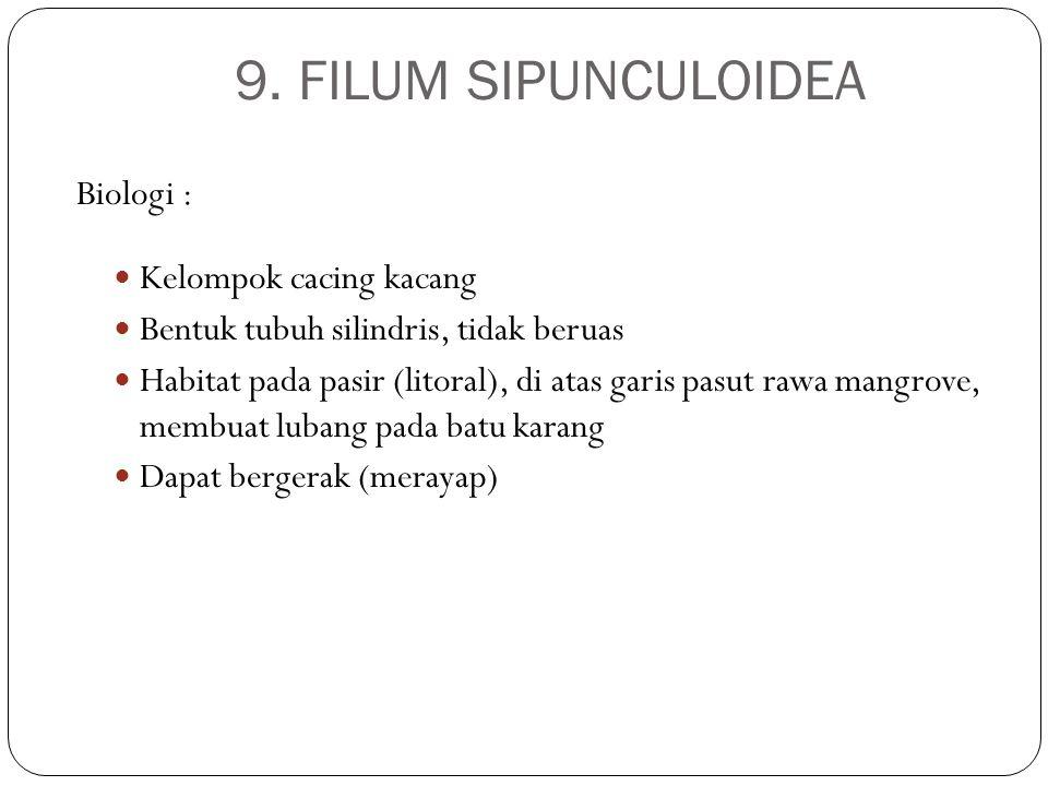 9. FILUM SIPUNCULOIDEA Biologi : Kelompok cacing kacang Bentuk tubuh silindris, tidak beruas Habitat pada pasir (litoral), di atas garis pasut rawa ma
