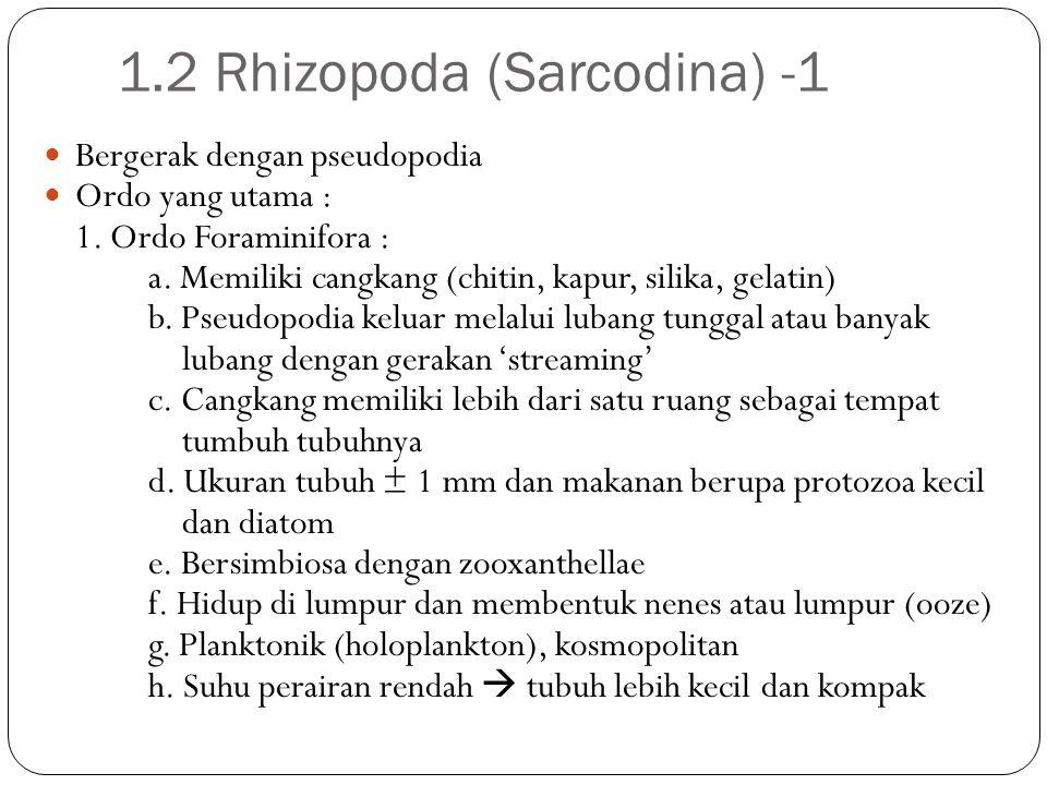 1.2 Rhizopoda (Sarcodina) -1 Bergerak dengan pseudopodia Ordo yang utama : 1. Ordo Foraminifora : a. Memiliki cangkang (chitin, kapur, silika, gelatin