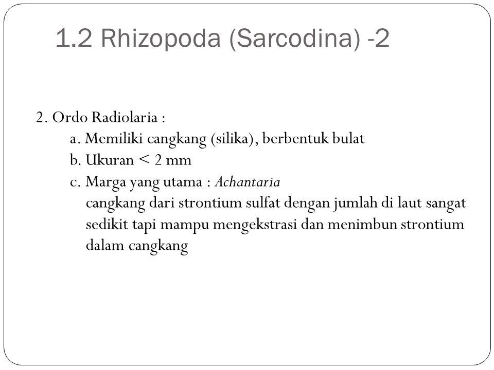 2. Ordo Radiolaria : a. Memiliki cangkang (silika), berbentuk bulat b. Ukuran < 2 mm c. Marga yang utama : Achantaria cangkang dari strontium sulfat d