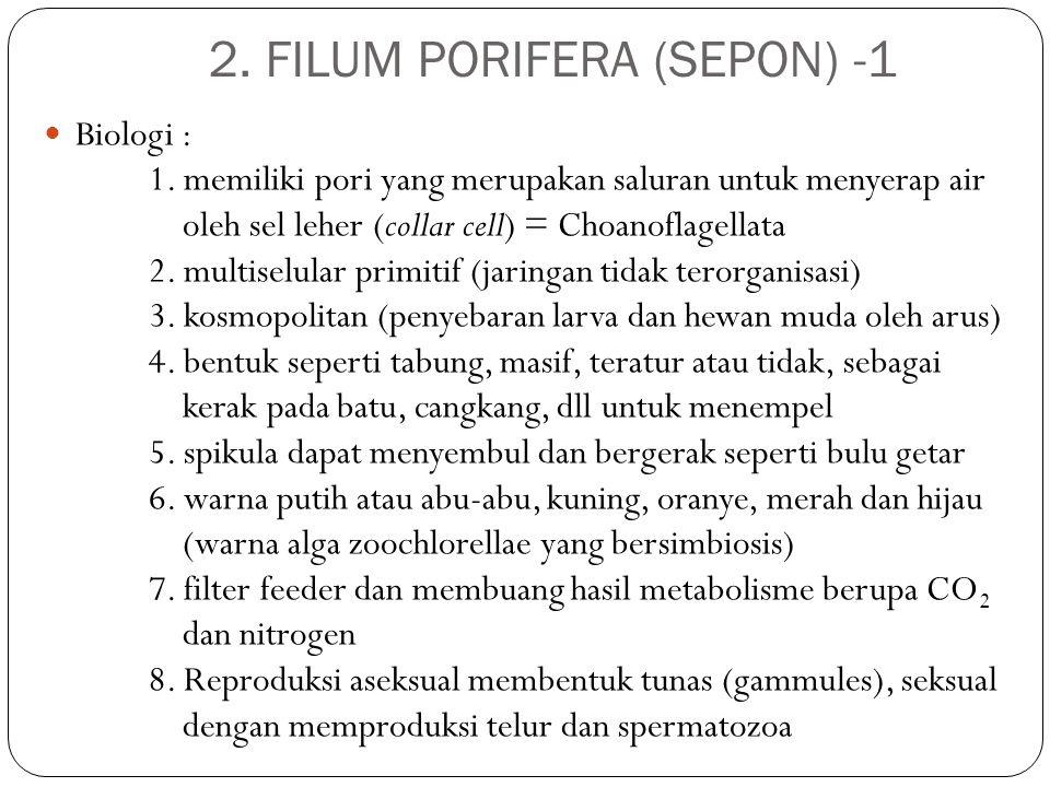 2. FILUM PORIFERA (SEPON) -1 Biologi : 1. memiliki pori yang merupakan saluran untuk menyerap air oleh sel leher (collar cell) = Choanoflagellata 2. m
