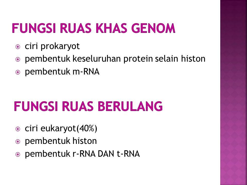  ciri prokaryot  pembentuk keseluruhan protein selain histon  pembentuk m-RNA  ciri eukaryot(40%)  pembentuk histon  pembentuk r-RNA DAN t-RNA