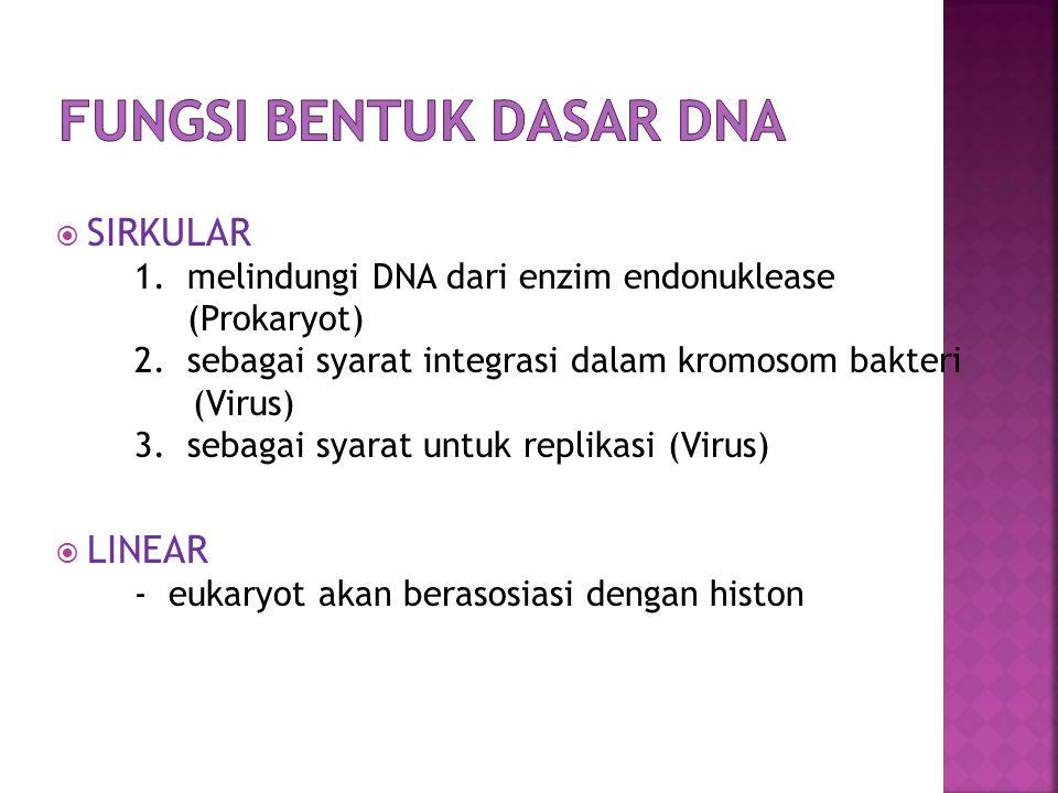  DNA BERUTAS GANDA (HELIKS) - DNA yang tersusun atas sumbu yang sama  DNA BERUTAS TUNGGAL (VIRUS) - satu molekul DNA terdiri atas satu rantai polinukleotida  DNA SUPERHELIKS (HELIKS GANDA) - merupakan satu DNA virus yang memiliki dua bentuk (rileks dan tegang)  topoisomerase