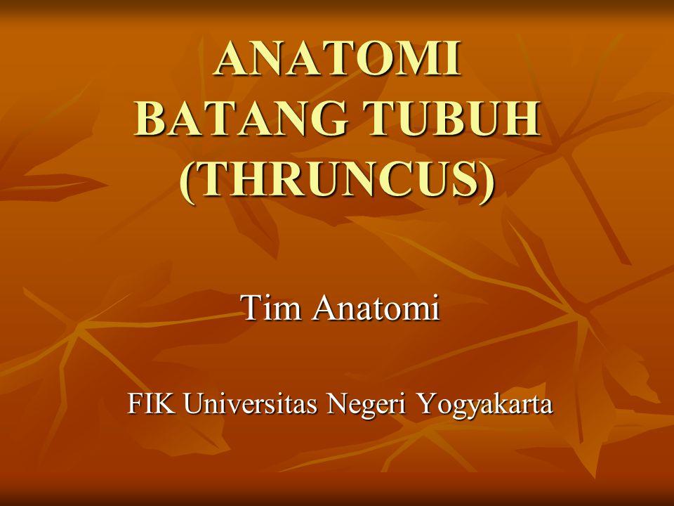 ANATOMI BATANG TUBUH (THRUNCUS) Tim Anatomi FIK Universitas Negeri Yogyakarta
