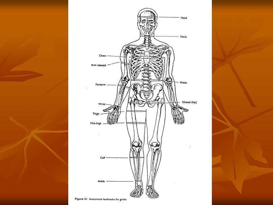 ANATOMICAL LANMARK FOR LENGTHS/HEIGHTS ACROMIALE-RADIALE: merupakan panjang lengan atas.