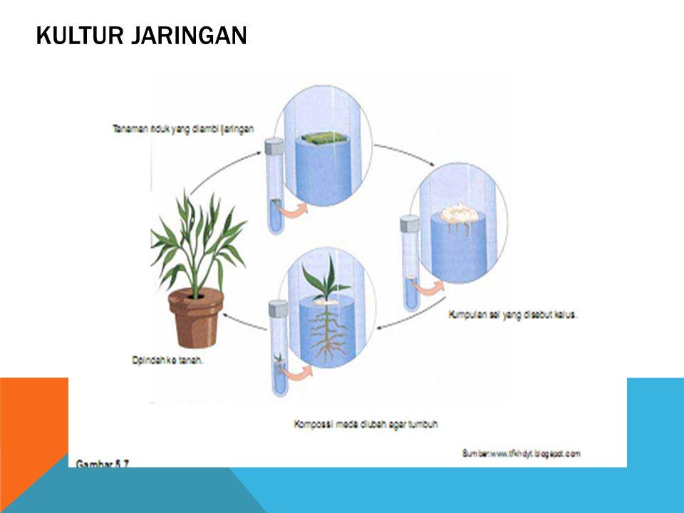 KULTUR JARINGAN Adalah teknik untuk memperoleh bibit tanaman dengan cara menumbuhkan sebagian jaringan tumbuhan dalam media khusus. Teori yang melanda