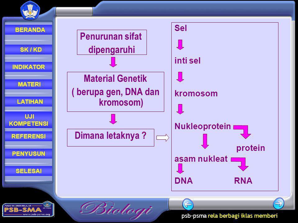 psb-psma rela berbagi iklas memberi REFERENSI LATIHAN MATERI PENYUSUN INDIKATOR SK / KD UJI KOMPETENSI BERANDA SELESAI Sel inti sel kromosom Nukleoprotein protein asam nukleat DNA RNA Penurunan sifat dipengaruhi Dimana letaknya .