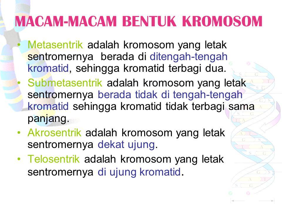 KROMOSOM (3) Kariotipe manusia. Tampilan visual kromosom setiap Individu dinamakan Kariotipe.