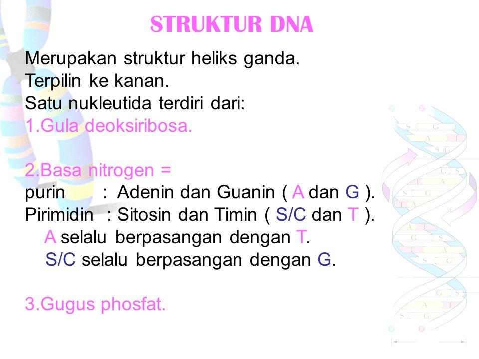 LETAK DAN SIMBOL ALEL Homozigot dominan = buah manis MM. Homozigot resesif = buah asam mm. Heterozigot = buah manis Mm. Fenotip = sifat yang tampak. G