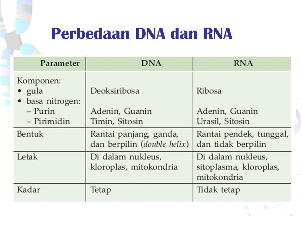 RNA Struktur kimia urasil dan ribosa pada RNA. Struktur RNAt. Makromolekul penyimpan dan penyalur informasi genetik Ada 3 tipe RNA: RNAd  membawa kod