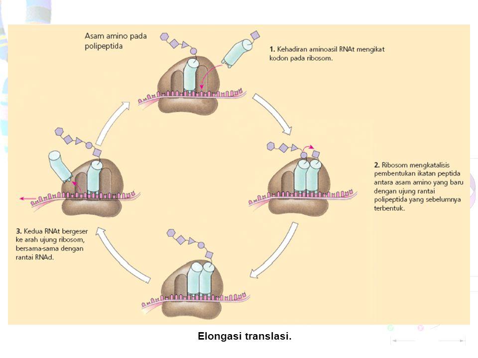 Mekanisme dasar translasi. Inisiasi translasi.