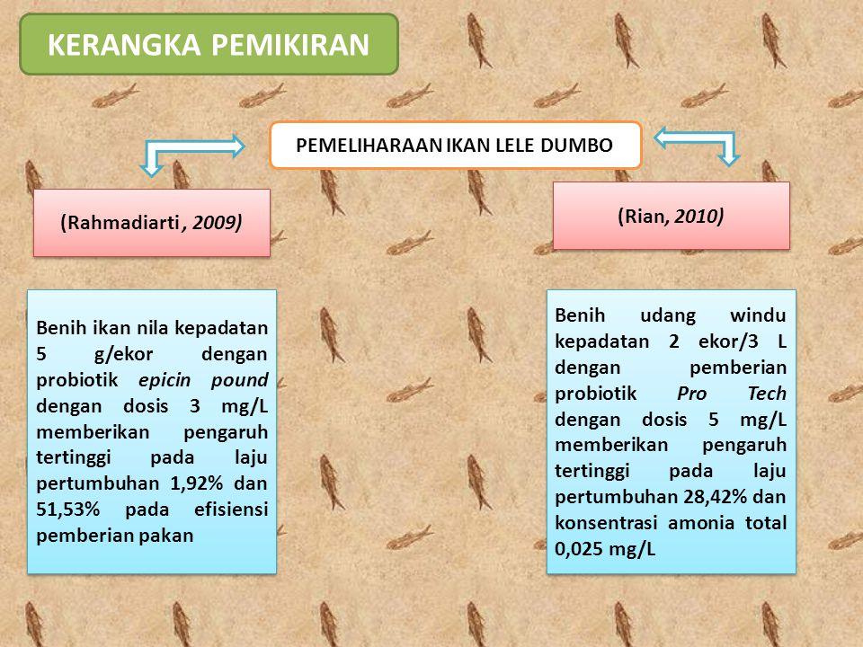 HIPOTESIS Probiotik dengan carrier zeolit pada pembesaran ikan lele dumbo (Clarias gariepinus) dengan dosis 5 mg/L akan memberikan pengaruh yang paling tinggi terhadap kelangsungan hidup dan laju pertumbuhan ikan lele (Clarias gariepinus) Probiotik dengan carrier zeolit pada pembesaran ikan lele dumbo (Clarias gariepinus) dengan dosis 5 mg/L akan memberikan pengaruh yang paling tinggi terhadap kelangsungan hidup dan laju pertumbuhan ikan lele (Clarias gariepinus)
