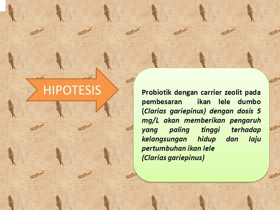 HIPOTESIS Probiotik dengan carrier zeolit pada pembesaran ikan lele dumbo (Clarias gariepinus) dengan dosis 5 mg/L akan memberikan pengaruh yang palin
