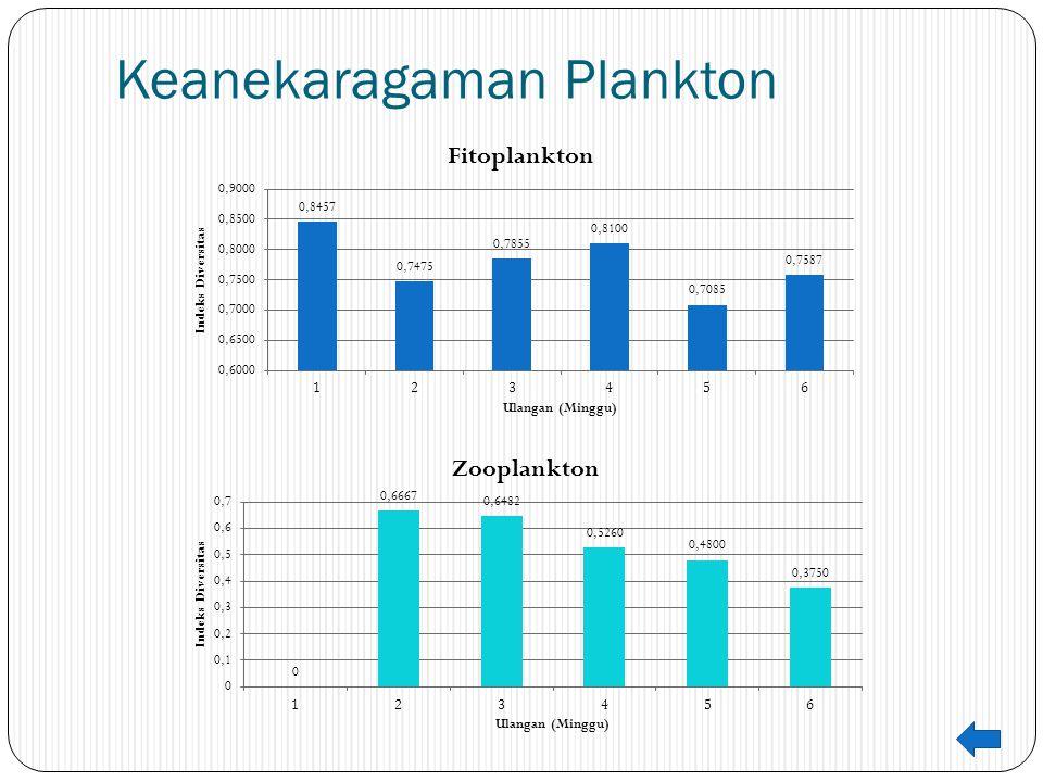 Keanekaragaman Plankton