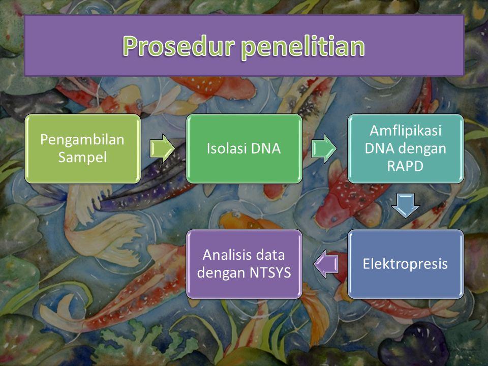 Pengambilan Sampel Isolasi DNA Amflipikasi DNA dengan RAPD Elektropresis Analisis data dengan NTSYS