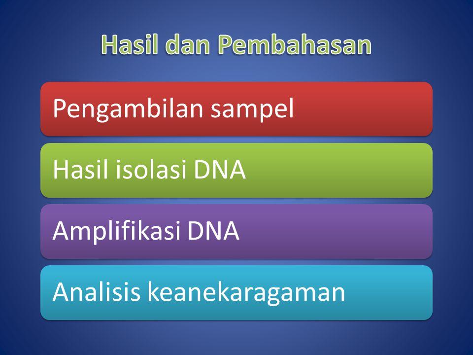 Pengambilan sampelHasil isolasi DNAAmplifikasi DNAAnalisis keanekaragaman