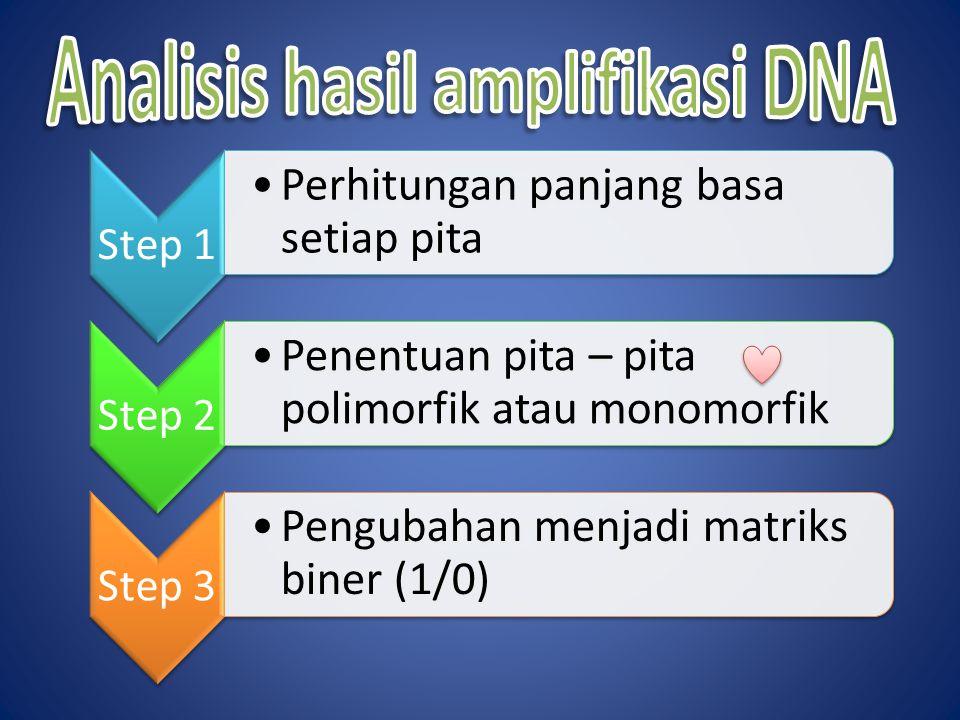 Step 1 Perhitungan panjang basa setiap pita Step 2 Penentuan pita – pita polimorfik atau monomorfik Step 3 Pengubahan menjadi matriks biner (1/0)