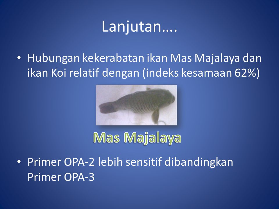 Lanjutan…. Hubungan kekerabatan ikan Mas Majalaya dan ikan Koi relatif dengan (indeks kesamaan 62%) Primer OPA-2 lebih sensitif dibandingkan Primer OP