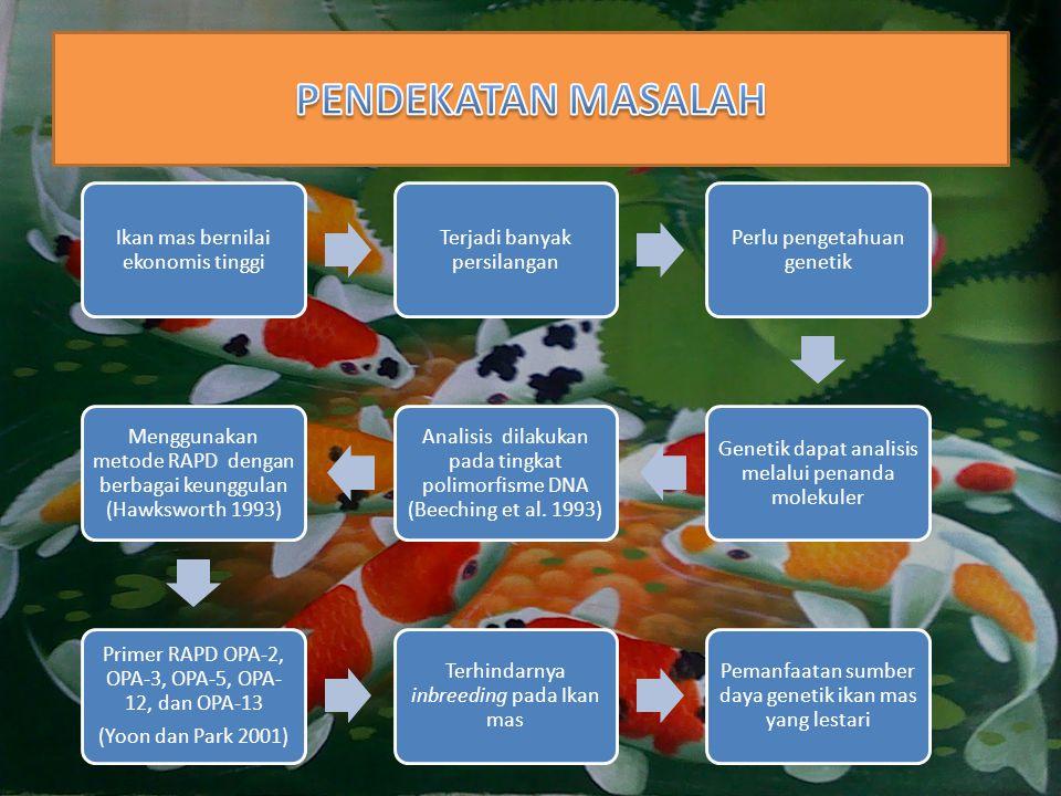 Ikan mas bernilai ekonomis tinggi Terjadi banyak persilangan Perlu pengetahuan genetik Genetik dapat analisis melalui penanda molekuler Analisis dilak