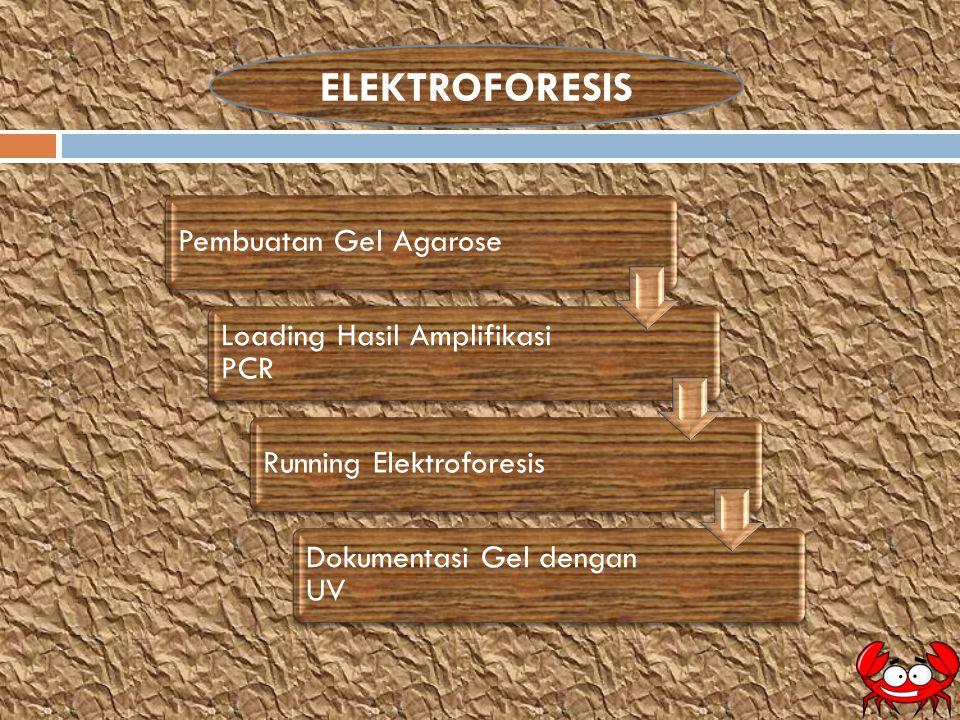 ELEKTROFORESIS Pembuatan Gel Agarose Loading Hasil Amplifikasi PCR Running Elektroforesis Dokumentasi Gel dengan UV