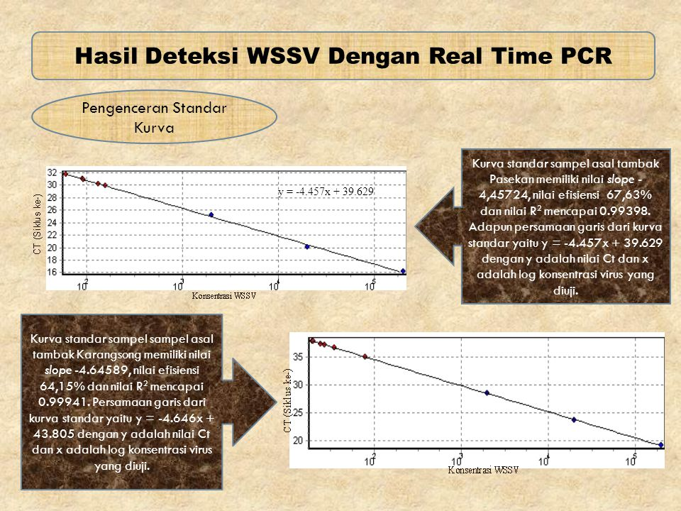 Hasil Deteksi WSSV Dengan Real Time PCR Pengenceran Standar Kurva Kurva standar sampel asal tambak Pasekan memiliki nilai slope - 4,45724, nilai efisi
