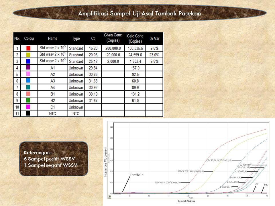 Amplifikasi Sampel Uji Asal Tambak Pasekan Keterangan : 6 Sampel positif WSSV 1 Sampel negatif WSSV