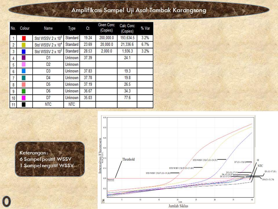 Amplifikasi Sampel Uji Asal Tambak Karangsong Keterangan : 6 Sampel positif WSSV 1 Sampel negatif WSSV