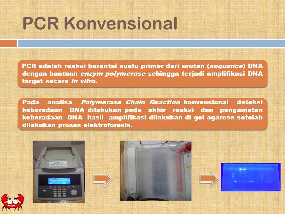 PCR Konvensional PCR adalah reaksi berantai suatu primer dari urutan (sequence) DNA dengan bantuan enzym polymerase sehingga terjadi amplifikasi DNA t